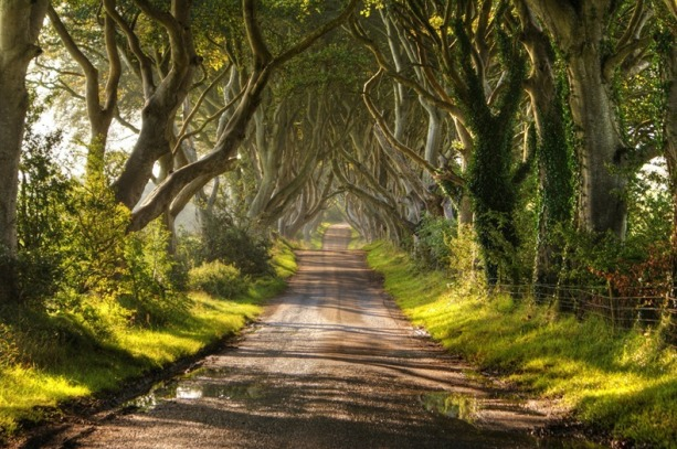 dark-hedges-22