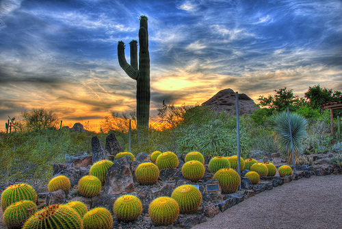 desertbotanical