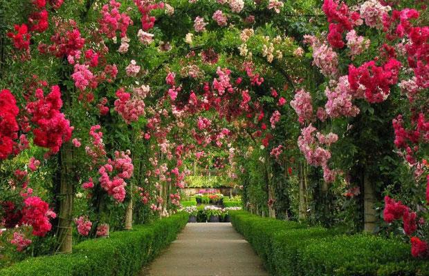 garden-buchart