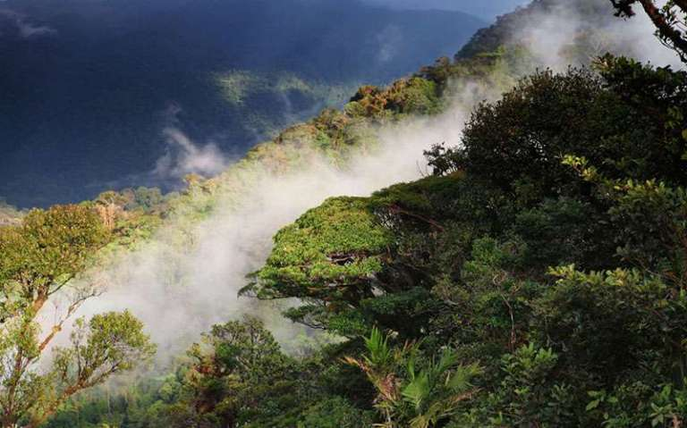 monteverde_cloud_forest
